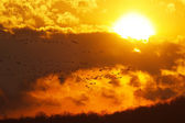 Geese Flying at Sunset — Stock Photo