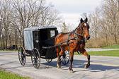 Amish koně a kočár — Stock fotografie