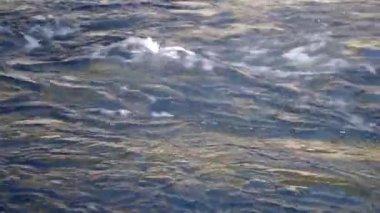 Station de pompage de l'eau — Vidéo
