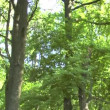 Stock Video: Spruce Tree Forest in Last Sunlight