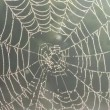 Stock Video: Water on spider web