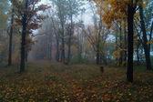 Autumn misty forest — Stock Photo