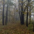 Autumn misty forest — Stock Photo
