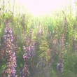 Beautiful flowers meadow field against blue sky and sunset with wind — Stock Video #48306589