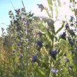 Beautiful flowers meadow field against blue sky and sunset with wind — Stock Video #48306623