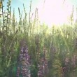 Beautiful flowers meadow field against blue sky — Stock Video #49361215