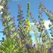 Beautiful flowers meadow field against blue sky — Stock Video #50634157