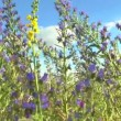 Beautiful flowers meadow field against blue sky — Stock Video #50634597