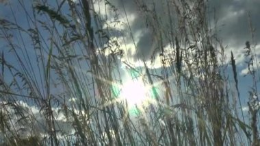 Green grass swaying in the wind. — Stock Video