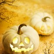 Halloween pumpkins — Stock Photo #12558679
