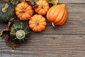 Herbst kürbisse — Stockfoto