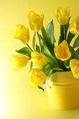 Yellow tulips on a yellow background — Stock Photo