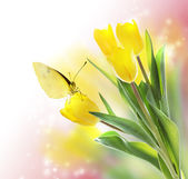 Yellow Tulips with a Butterfly — Fotografia Stock