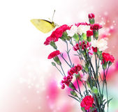 Pink Carnation with Butterfly — Stock Photo