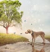 Dog and butterfies at a magical brook — Stock Photo