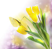 Yellow Tulips with a Butterfly — Stock Photo