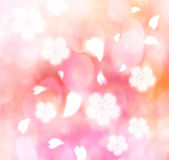 вишни в цвету фона — Стоковое фото