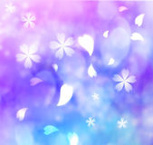 Flower petal purple, blue, pink background — Stock Photo