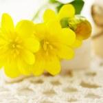 石鹸のバーの黄色い花 — ストック写真