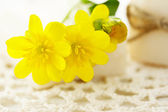 Yellow flowers with bars of soap — Stock fotografie