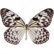 le papillon de cerf-volant de papier — Photo