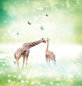 Giraffes in friendship or love concept image — Photo