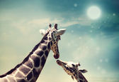 Giraffes in friendship or love concept image — 图库照片