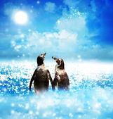 Tučňák pár v noci fantazijní krajina — Stock fotografie