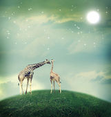 Giraffes in friendship or love concept image — Stok fotoğraf