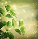 Leaves with green lights Background — Stock Photo