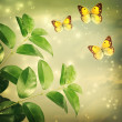 Butterflies on Green Star lights Background — Stock Photo