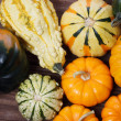 Assorted pumpkins and squashes — Lizenzfreies Foto