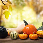 Pumpkins and squashes with a shinning fall background — Stok fotoğraf