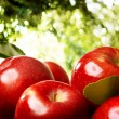 Foto Stock: Apples outdoors