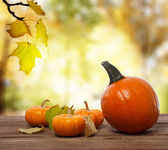 Squashes and pumpkins on shinning fall background — Stok fotoğraf