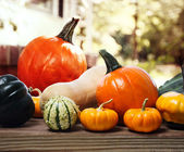 Varieties of pumpkins and squashes — Stock Photo