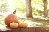 Pumpkins and squashes outside — Stock Photo