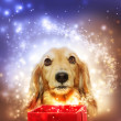 Dachshund opening a magic box — Stock Photo