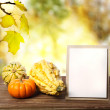 Squashes and greeting card — Stock Photo #33238301
