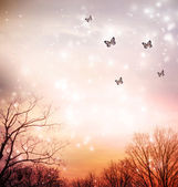 Butterflies on red trees background — Stock Photo