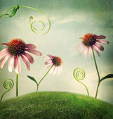 Echinacea flowers in fantasy landscape — Stock Photo