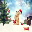 Dachshund dog decorating christmas tree — Stock Photo #34749431