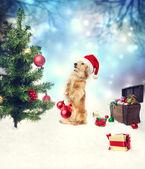 Dachshund dog decorating christmas tree — Stock Photo