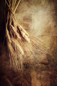 Ears of wheat — Foto de Stock