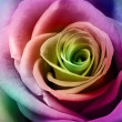 Beautiful colorful rose — Stock Photo #38728829