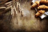 Fresh croissants and wheat — Stock fotografie