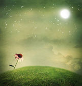 One echinacea flower under the moon — Stock Photo
