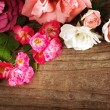 Assortment of beautiful roses — Stock Photo