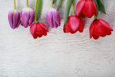 Red and purple tulips — Zdjęcie stockowe