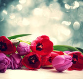Red and purple tulips over abstract light background — Stock Photo